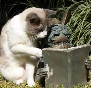 catthink001.jpg