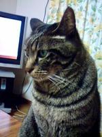 feb08-shacho004.jpg