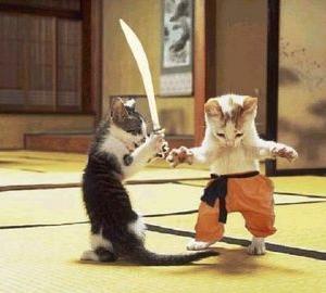 kitten-vs.jpg