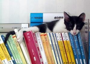 snooze.jpg